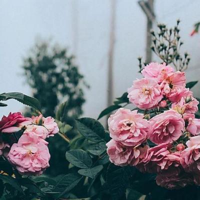 fleur de l'été
